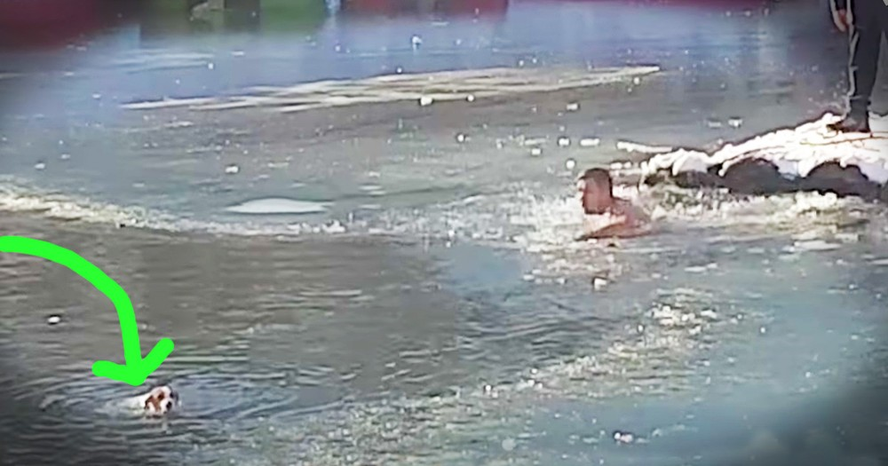 Dog Drowning In A Freezing Lake Rescued By A Brave Stranger