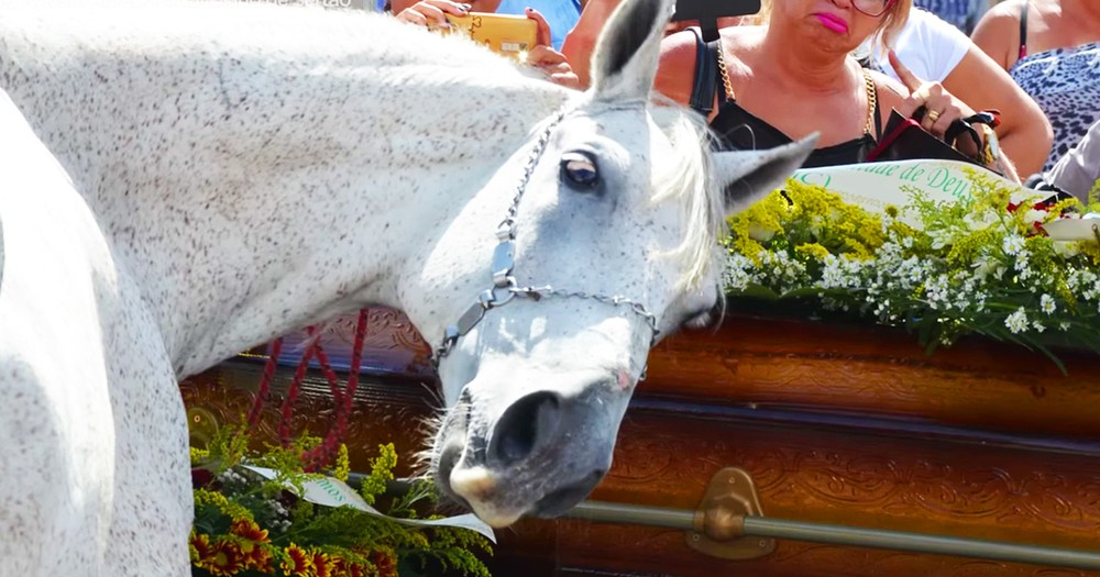 Horse Grieving At His Human's Funeral Is A Tear-Jerker