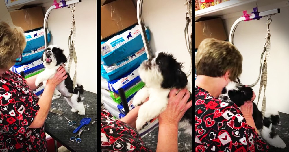 Precious Dog Cannot Stop Singing For Her Favorite Groomer