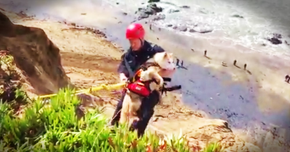 Dramatic Rescue Of A Dog Who Feel Off A Cliff