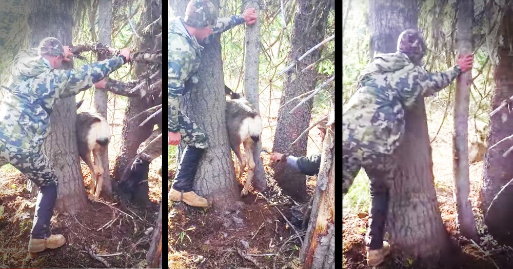 Hunters Rescue A Deer Trapped Between Two Trees