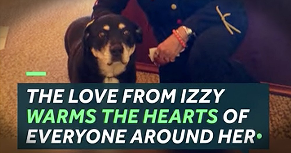 Elderly Dog Finds His New Home And Cheers Up Nursing Home After His Owner Passes