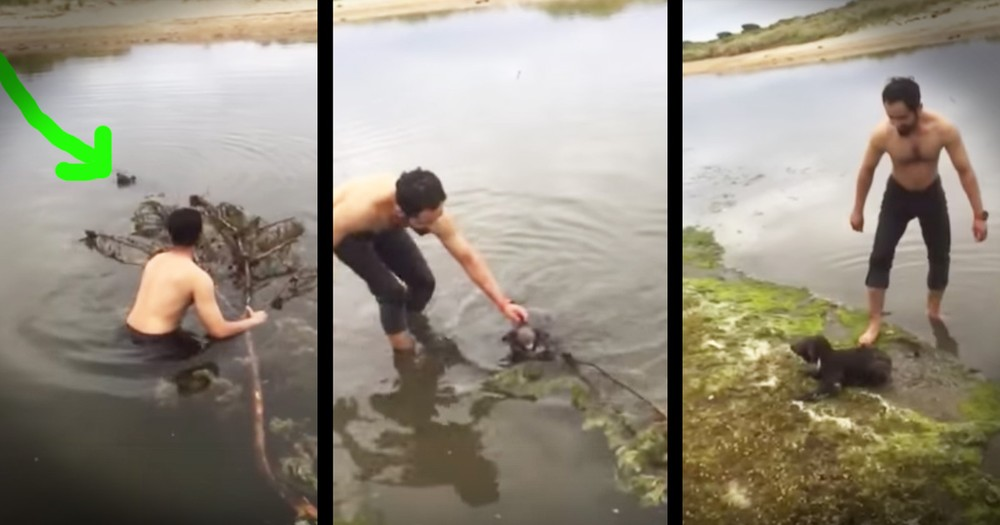 Drowning Koala Gets An Amazing Rescue From Kind Strangers