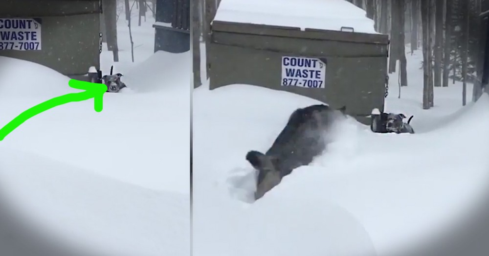 Dog Notices His Friend Is Stuck In The Snow And Comes Up With A Brilliant Plan