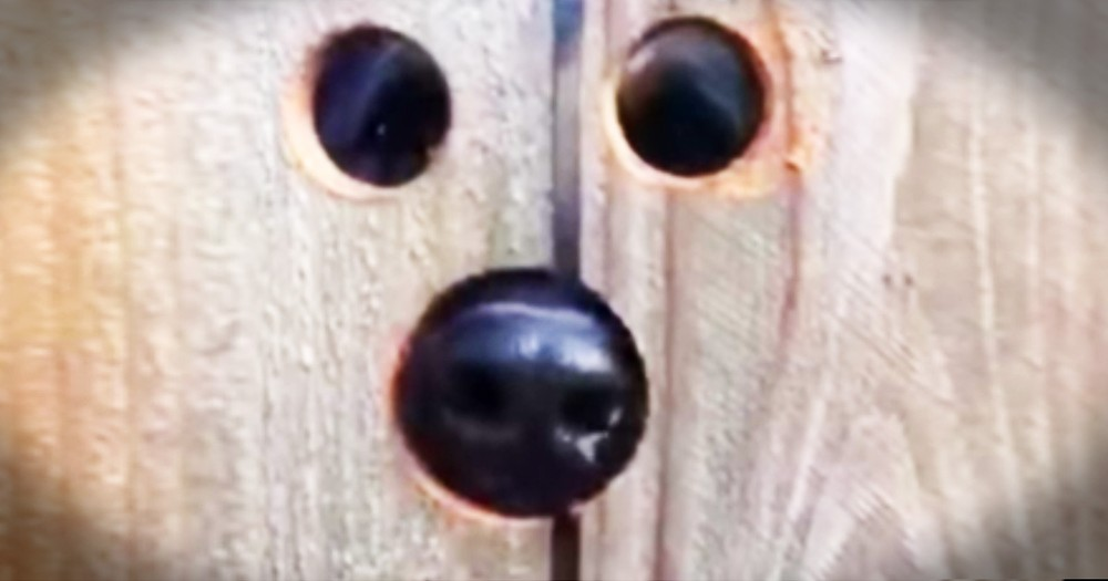 Neighbor Cuts Hole In Fence So Dog Can See Into Their Yard
