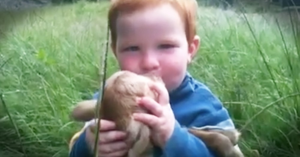 Adorable Little Boy Showers Baby Goat With Kisses And Love