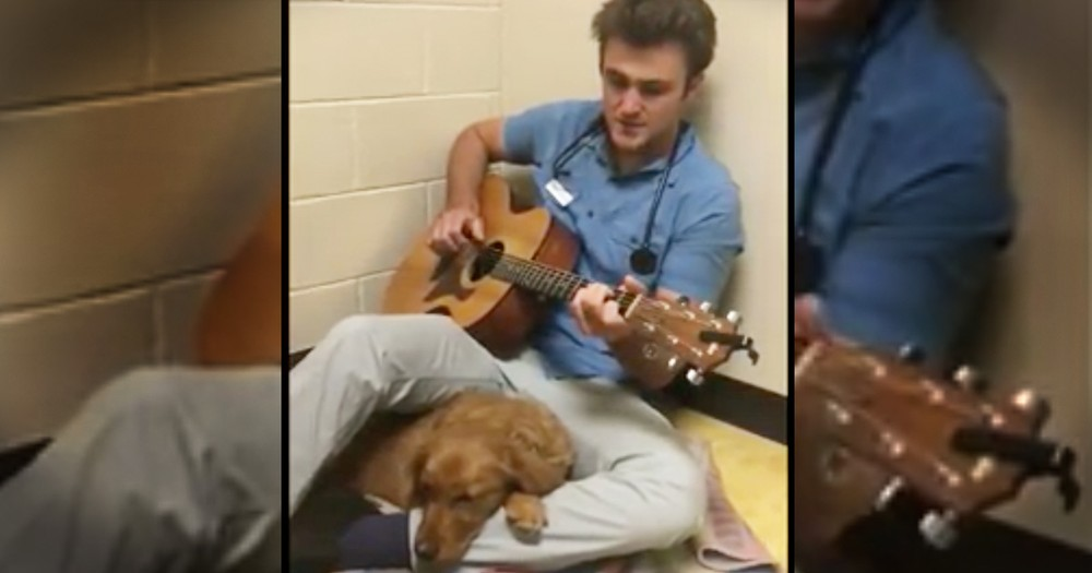 Vet Plays Sweet Song For Pup About To Go Into Surgery