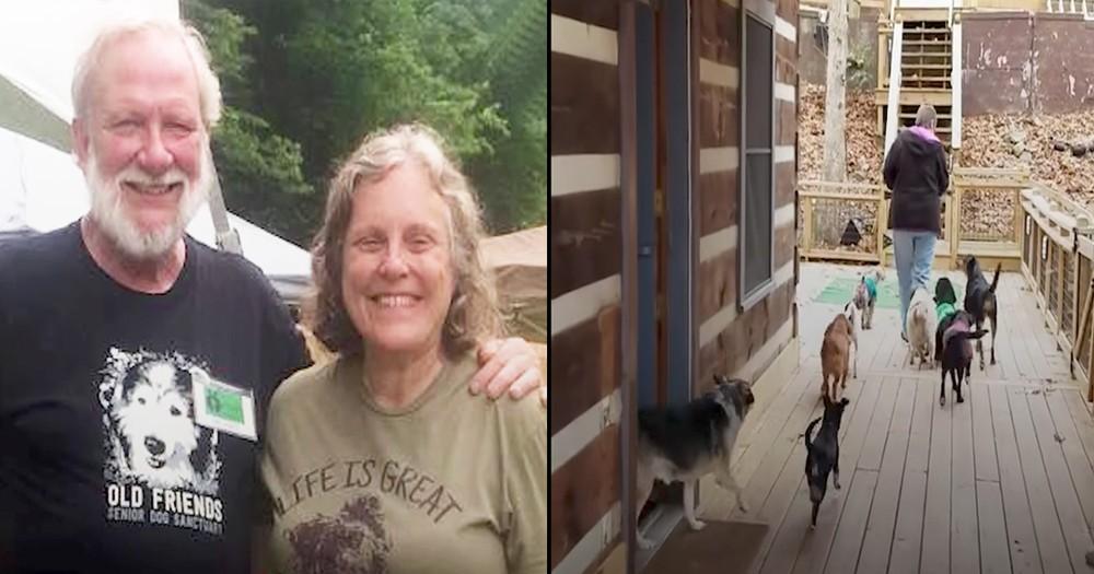 Selfless Couple Left Jobs To Start Senior Dog Shelter