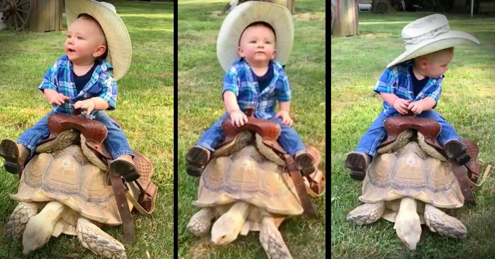 Adorable Little Cowboy Rides Turtle Instead Of Horse