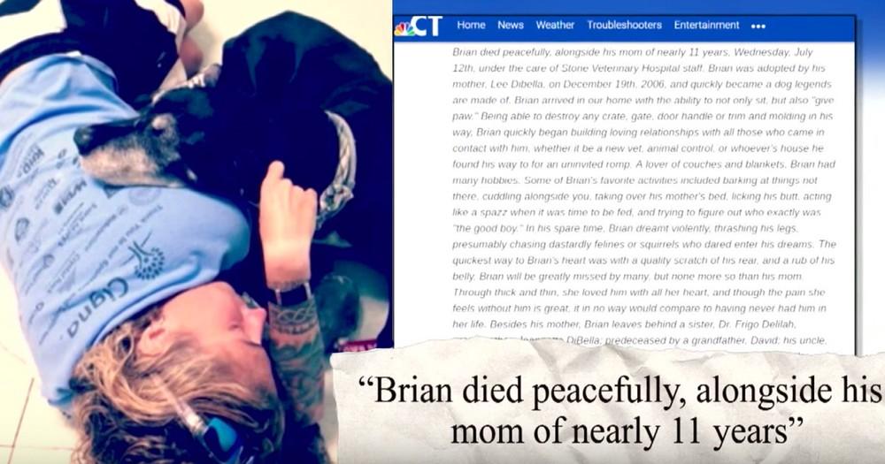 Kind Owner Writes Viral Obituary For Her Dog