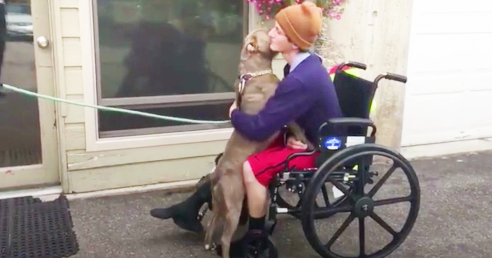 Man's Heartfelt Reunion With Lost Pit Bull After Accident