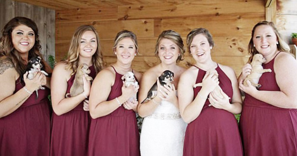 Bridesmaids Carry Puppies Instead Of Bouquets For The Sweetest Reason