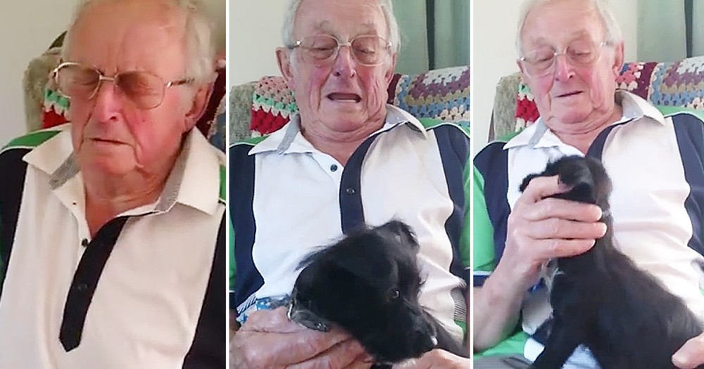 Family Surprises Grandpa With A Puppy