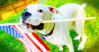 These 12 Patriotic Pups Are Ready For July 4th