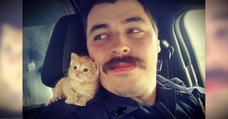 A Cop Rescued An Abandoned Kitten And The 2 Make The Cutest Partners!
