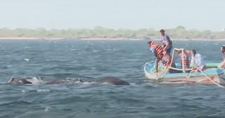 Heroic Naval Officers Rescue Stranded Elephants In Ocean