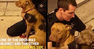 Heroic Police Officer Stops To Rescue Two Abandoned Pit Bulls