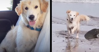 Kind Travelers Drive 14 Hours To Give Stray Puppy A Home