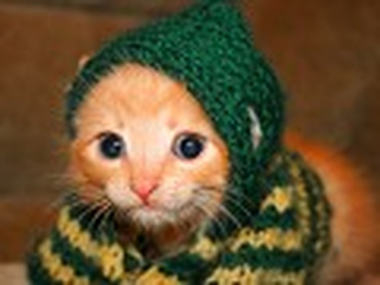 Tiny Kitten Wears a Newly Sewn Outfit