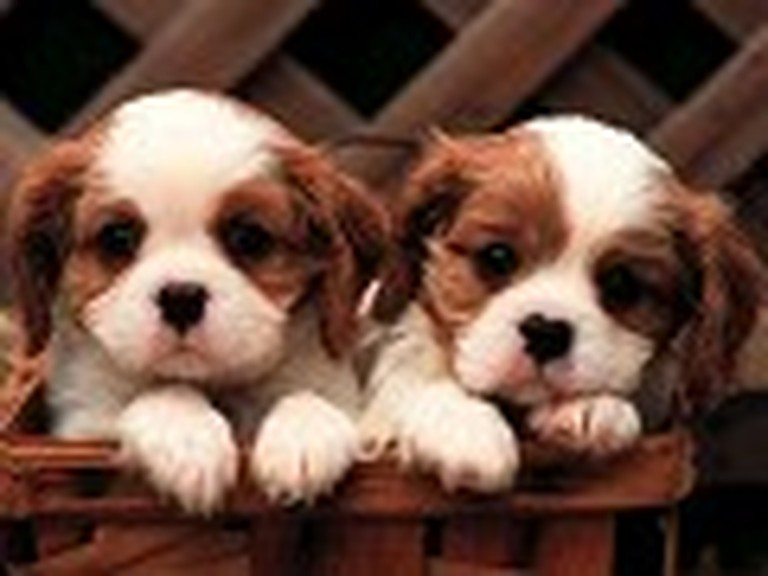 Two Cute Puppies in a Basket