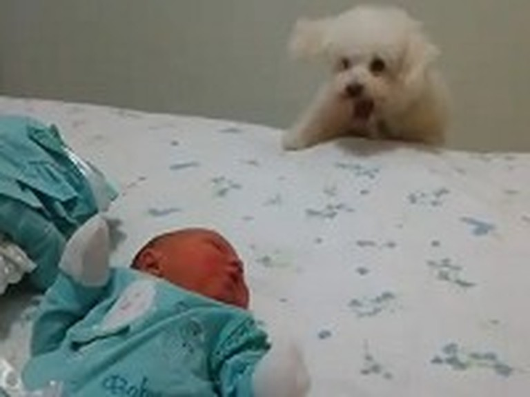 Little Dog Wants this Baby More Than Anything