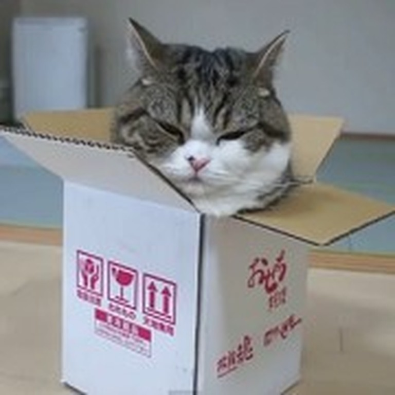Funny Cat Has More Fun with a Box Than You Can Imagine