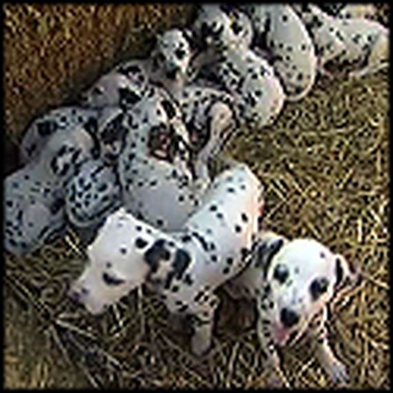 Real Life 101 Dalmatians - Awww So Cute