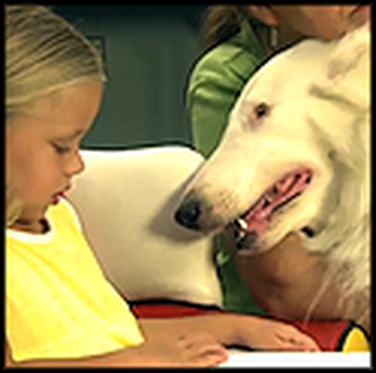 Meet the Blind Dog with a Superhero Ability