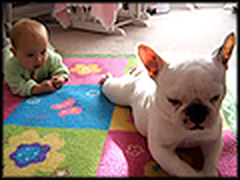 French Bulldog Teaches a Cute Baby How to Crawl