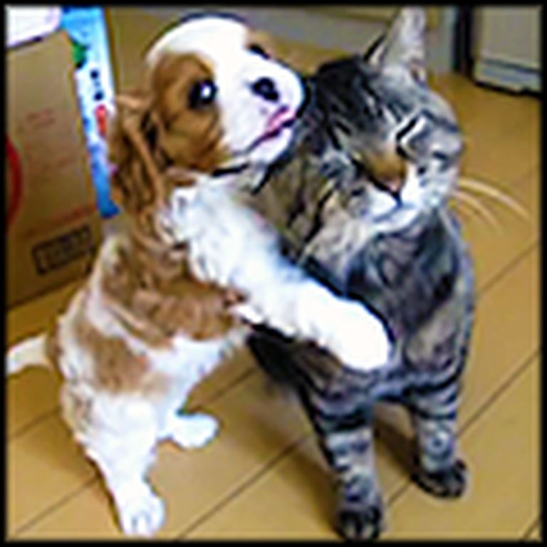 Patient Kitty Lets her New Puppy Play All Over Her