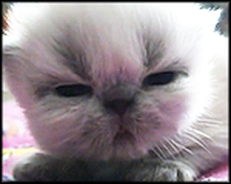 Fluffball Kitten Opens Her Eyes for the First Time