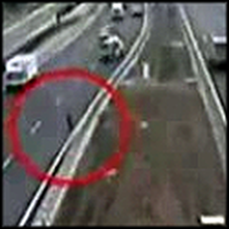 Dog Rescues Another Dog That Was Hit by a Car - AMAZING