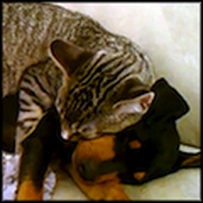 Kitty and Puppy are in Love - This Will Melt Your Heart