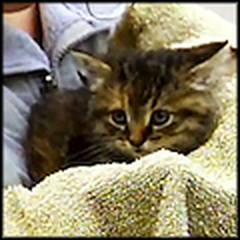 People Work Together to Rescue a Tiny Trapped Kitten