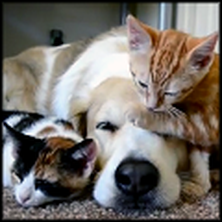 Doggy Takes a Nap With his Kitty Friends - Way Too Cute