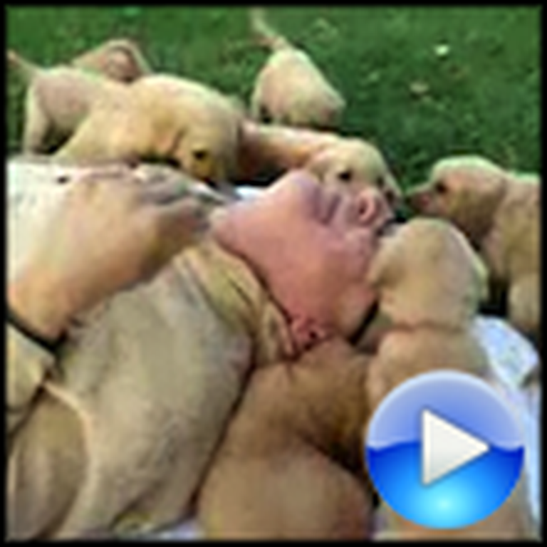 Man Gets Mauled by an Invasion of Happy Puppies