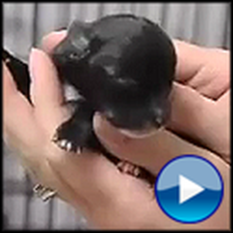 One Day Old Chihuahua Gets Some Unlikely Help