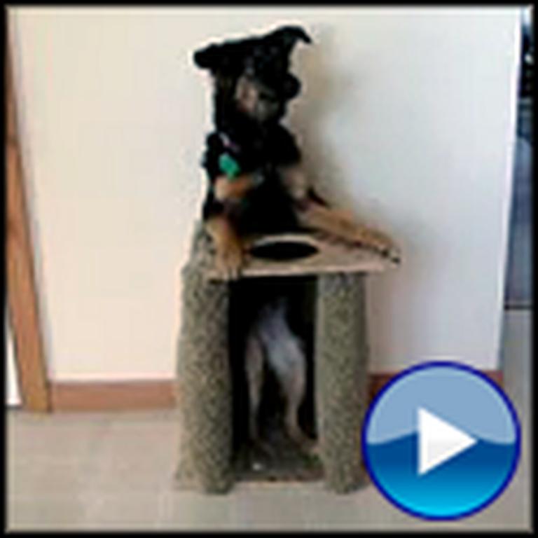 Dog With Congenital Megaesophagus is Super Smart