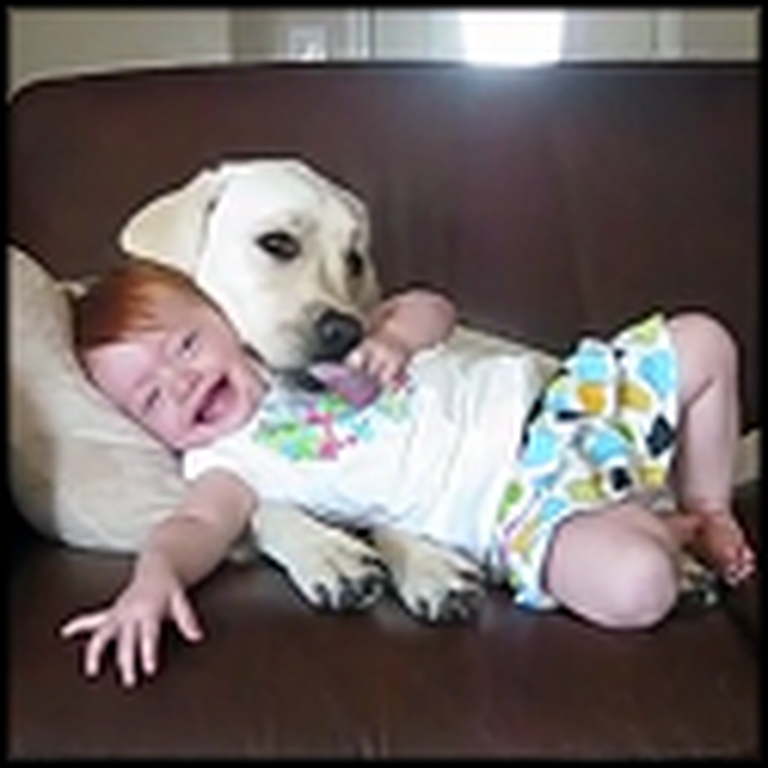 Happy Dog and Cute Baby Really Love Each Other