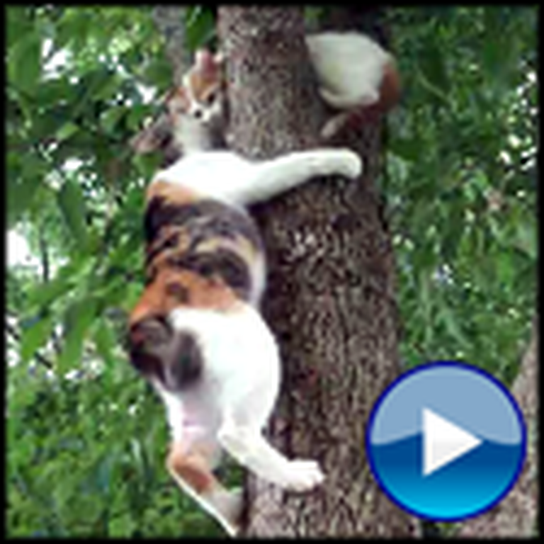 Mama Cat Comes to the Rescue of her Little Kitty