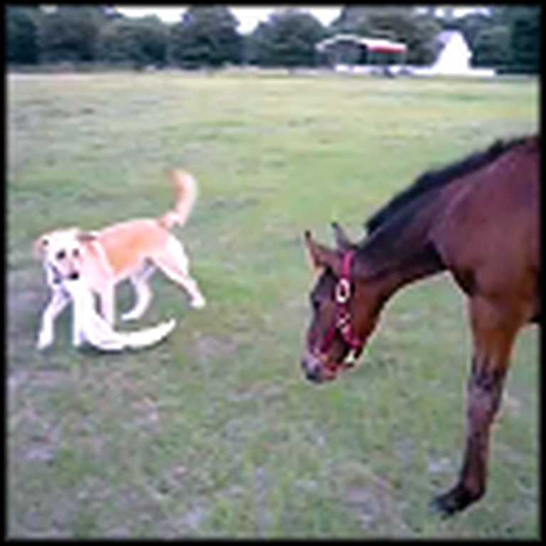 Baby Horse and Dog Play an Adorable Game of Tag