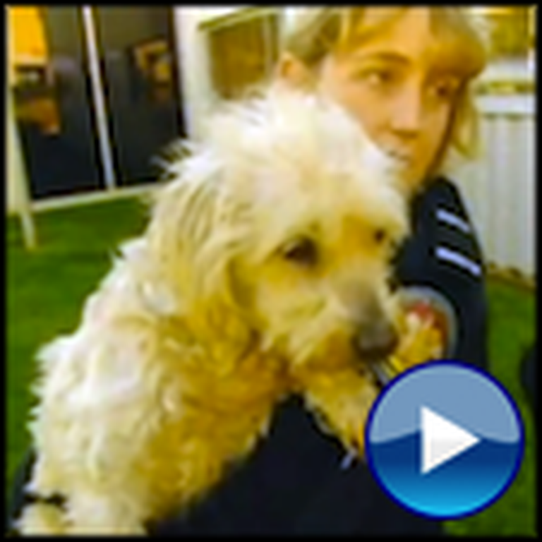 A Family's Dog Goes Missing for 9 Years - But Then Watch What Happens