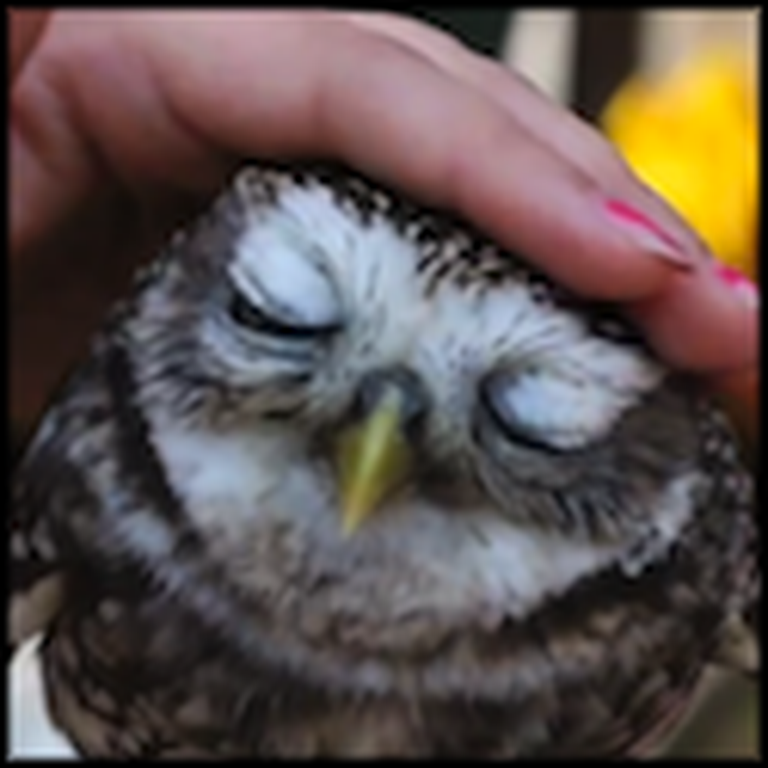 The Cutest and Most Adorable Little Owls You'll Ever See