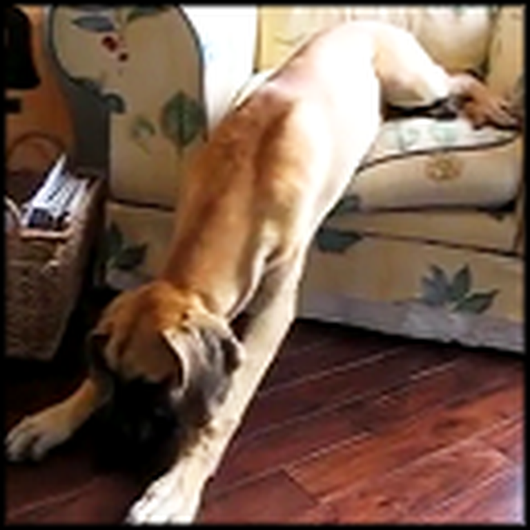 Doggy Wakes Up From a Nap - What He Does is Hilarious