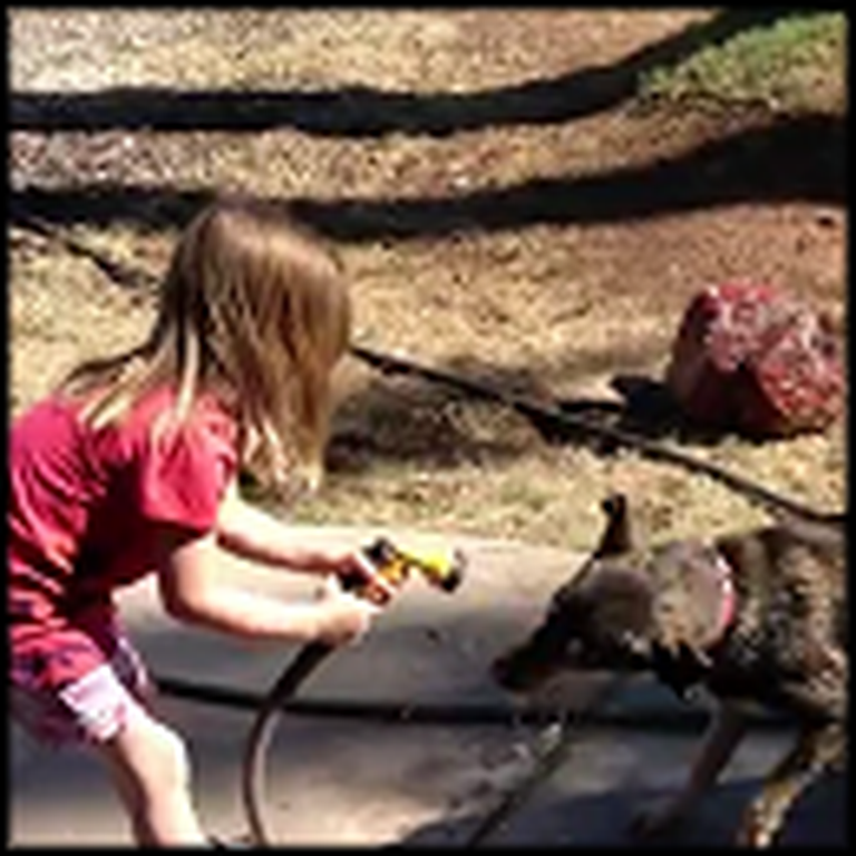 A Dog, a Little Girl, and a Hose Have Never Been So Cute