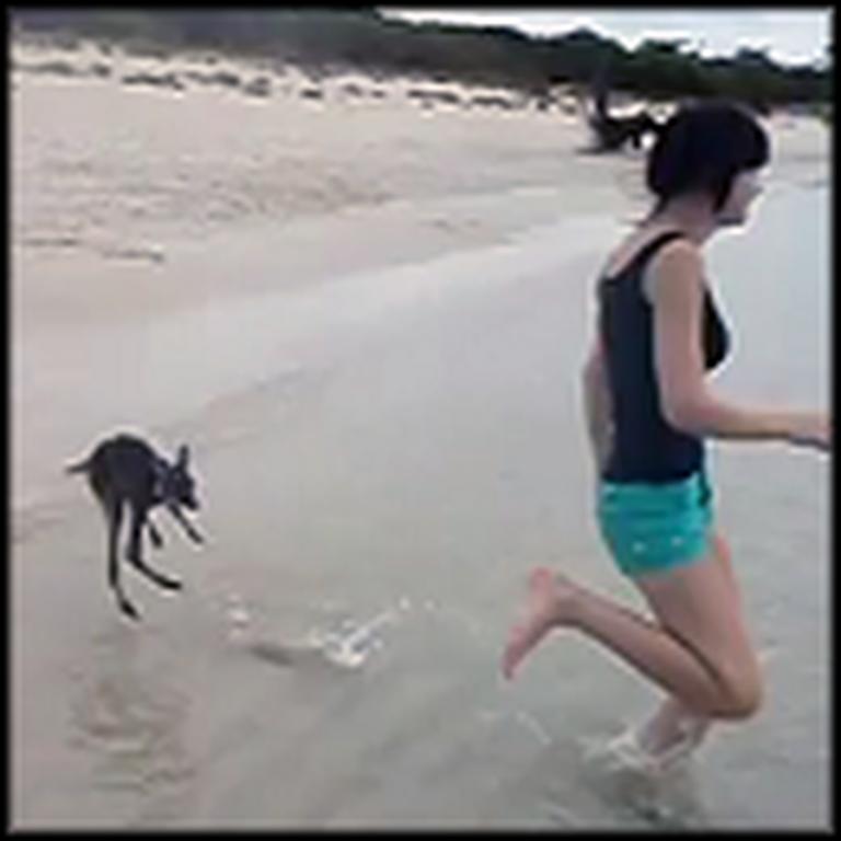 Little Baby Kangaroos Bounce Around the Beach