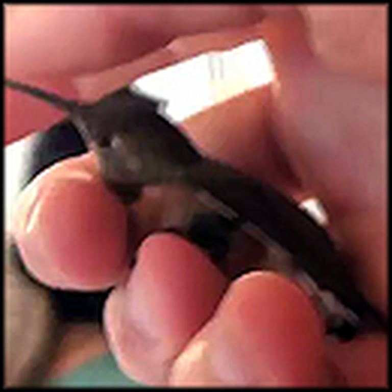 A Short But Very Sweet Hummingbird Rescue