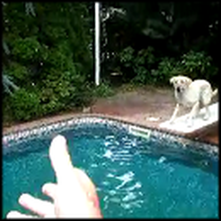 Awesome Dog Uses a Diving Board to Catch a Ball