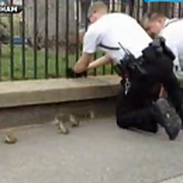 Secret Service Helps Ducklings on the White House Lawn - Awww