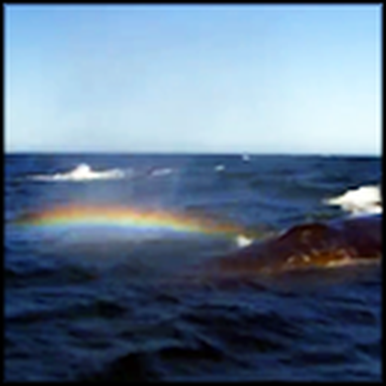 Whale Sprays a Rainbow Out of its Blowhole - Awesome Video